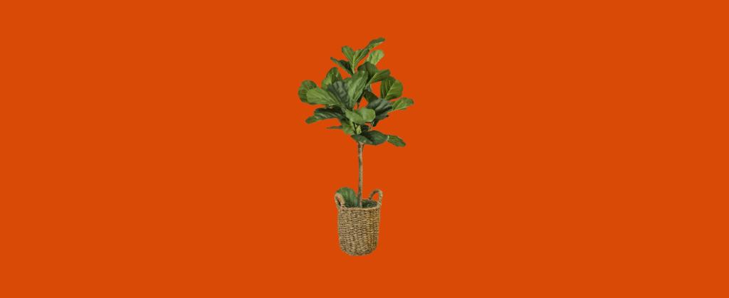 best home office indoor plants